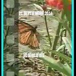 Y la buena noticia YA ESTAN EN #Monterrey esta chulada llego al asilo en la mañana #Michoacan #EdoMex #tamaulipas http://t.co/6IPTysP8Oq