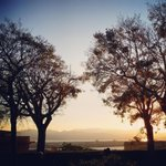 Bellissimi i Celtis Australis: disegnano coi rami pizzi neri, sullo sfondo doro del tramonto.#cagliari2019 #sardegna http://t.co/C12Il2fke6