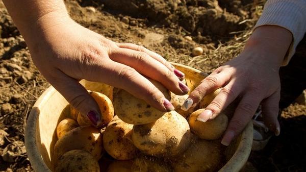 Картошка проросла во влагалище доверчивой девушки http://t.co/nNUR7UEWPk http://t.co/kUkPq1KA3f