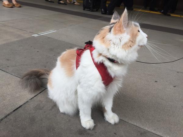 新宿駅に犬みたいな猫いた!! http://t.co/NrKRxvxmYk