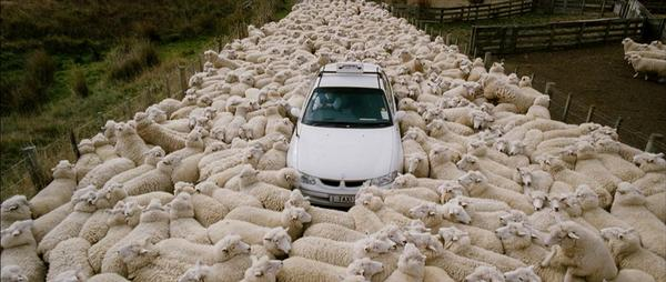 """Sheep (New Zealand)""      Where the hell is the taxi!!  Found at http://t.co/uuUPcg9CVK http://t.co/EFZpf3pO4v"