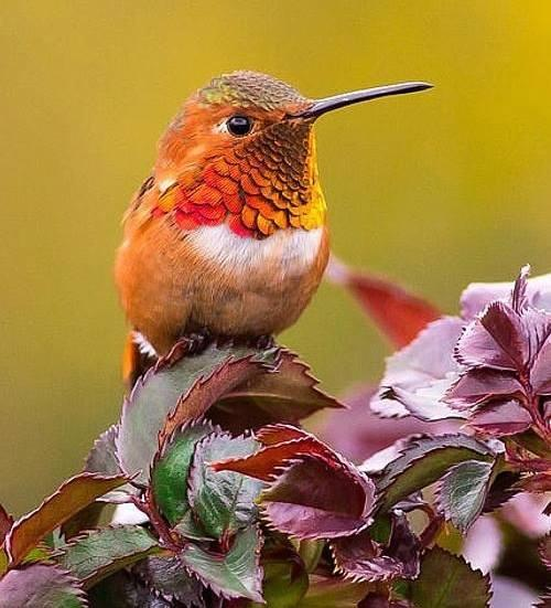 Mother Nature's splendor @CordeiroRick: http://t.co/W8B2ZXDDla