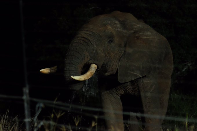 I@jimmyjohns was just on a safari in South Africa. How anyone could kill such a creature, I can't understand. A few pictures: https://t.co