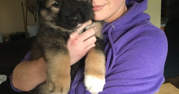 https://t.co/TKDt7SHoah Just met our new puppy!! #dogpictures #dogs #aww #cuteanimals #dogsoftwitter #dog #cute https://t.co/YGUlgpHB4w