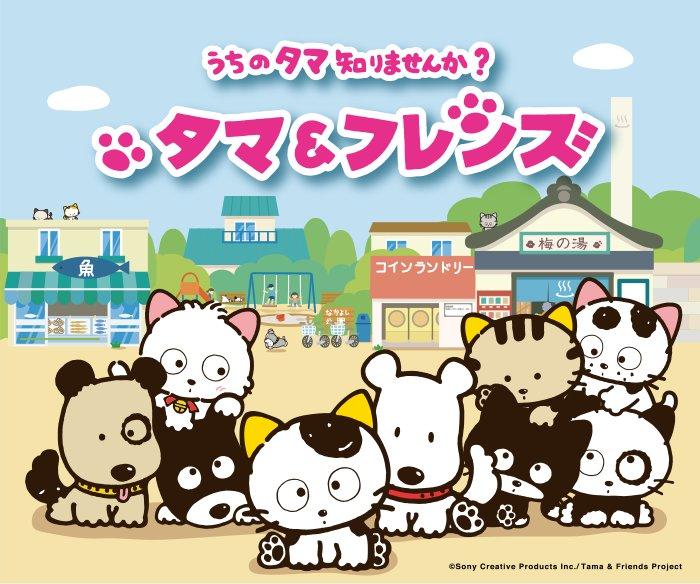 5月7日から青森朝日放送でアニメ「タマ&フレンズ~うちのタマ知りませんか?~」の放送がスタートします!毎週日曜日5時45