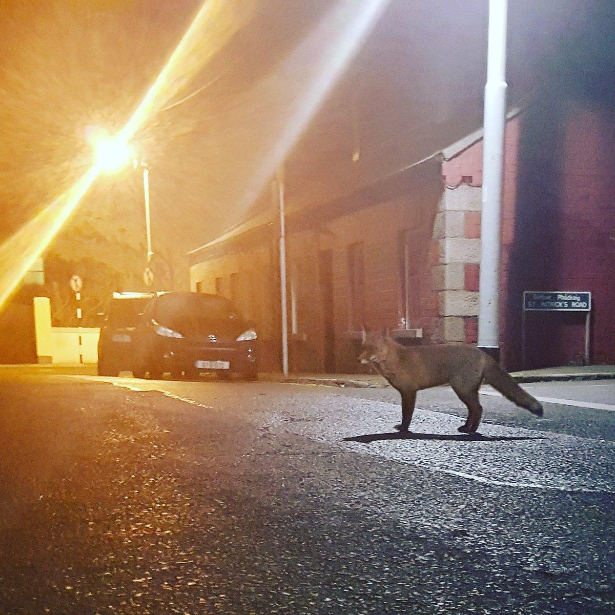 Fantastic Mr. Fox in Dalkey https://t.co/GjVD2u6btS