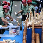 Closing China's Ivory Market: Will It Save Elephants?