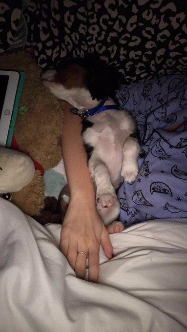 Cuddle buddy 🤗🐶❤️ Marley https://t.co/vGqkF2tHk6
