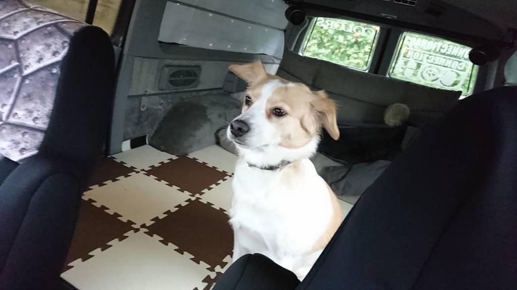 今日は愛犬たちとお出かけ。サバーバンの後ろは広すぎてなんだか寂しそうです。他の2匹のチビ達は膝の上です。#エスカレード#