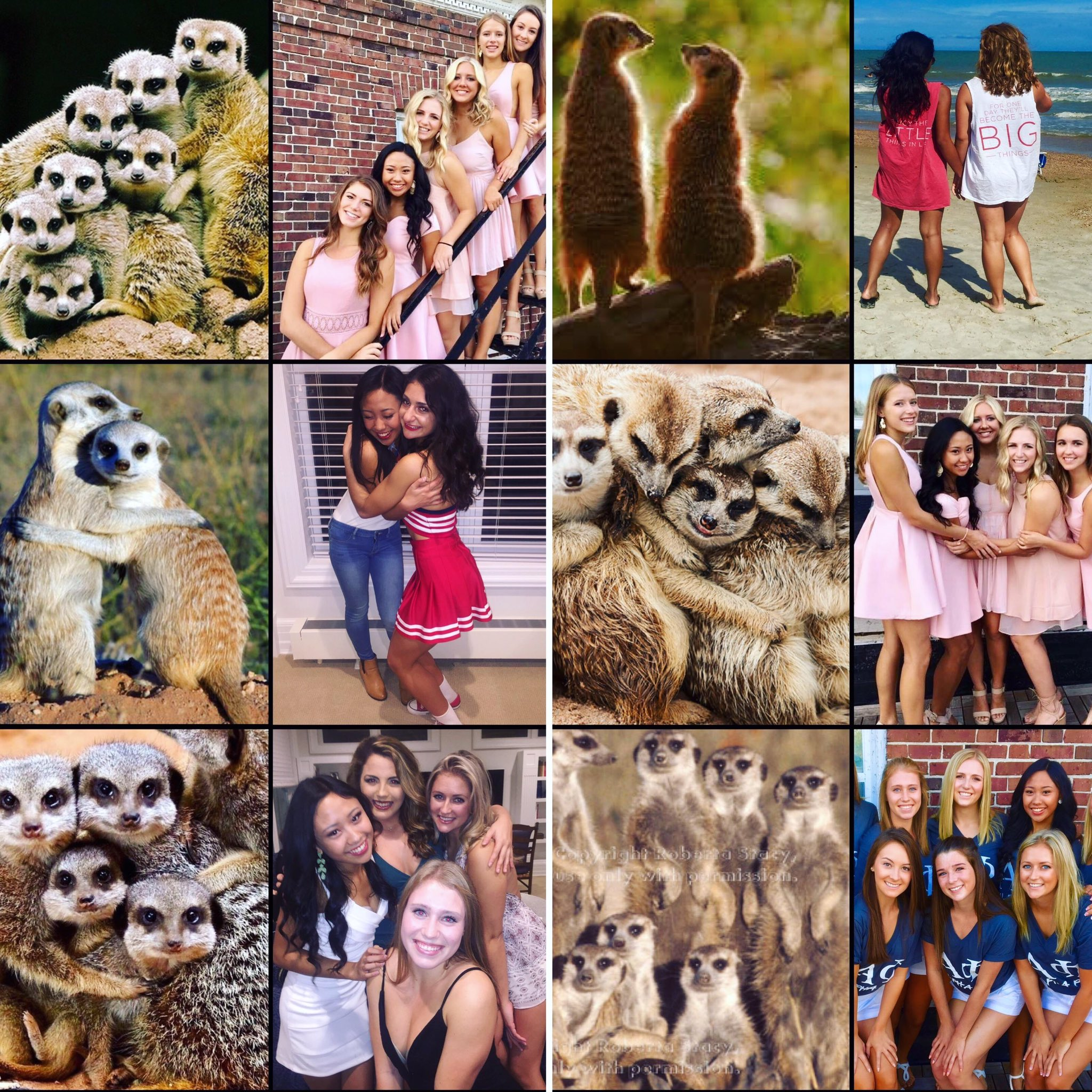 Sorority girls pose exactly like meerkats in pictures https://t.co/3kzfEdro90