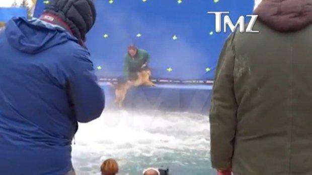 Winnipeg-shot movie #ADogsPurpose under fire for alleged animal abuse