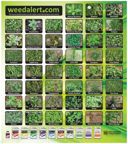 Free Weed Alert PosterFreebieFriday Coupons freebie samples giveaway FreeSAMPLE