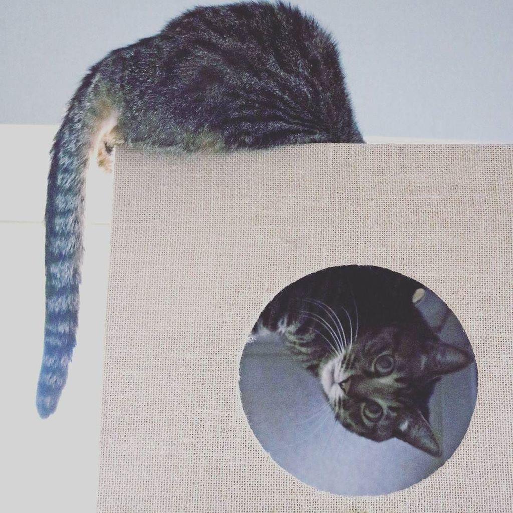 天地無用#担当N #ねこねこ横丁 #猫 #ねこ #ネコ #neko #cat #CAT #かわいい