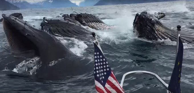 Lucky Fisherman Watches Humpback Whales Feed  https://t.co/ESaIk5GUjI  #fishing #fisherman #whales #humpback https://t.co/RWziE9ITMh