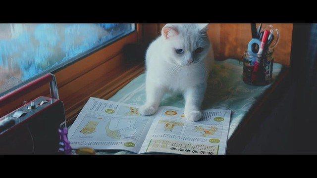 【猫の日】猫がこっそり勉強…ユーキャンの『ねこ勉』動画が可愛くて泣ける https://t.co/kfBMUrLKab  2匹の猫が、おばあさんのために通信講座「ユーニャン」でなど肩のもみ方などを学ぶ内容。じんわり泣ける映像です。