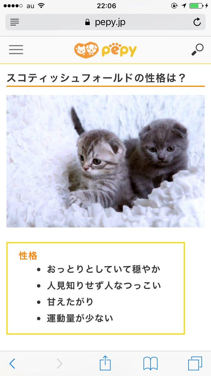 yu-ki♡をネコに例えるなら【スコティッシュフォールド】です。 #あなたをネコに例えるなら https://t.co/Ze6jeZagSq ずんぐりむっくりで運動量が少ない…私だw 一応甘えたも。 #ネコの日 #竹島の日 https://t.co/EI1JP5XJ7n