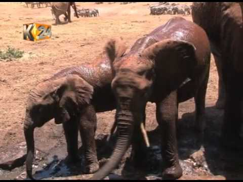Unsung Heroes: Patrick Mwalua supplies drinking water to wild animals