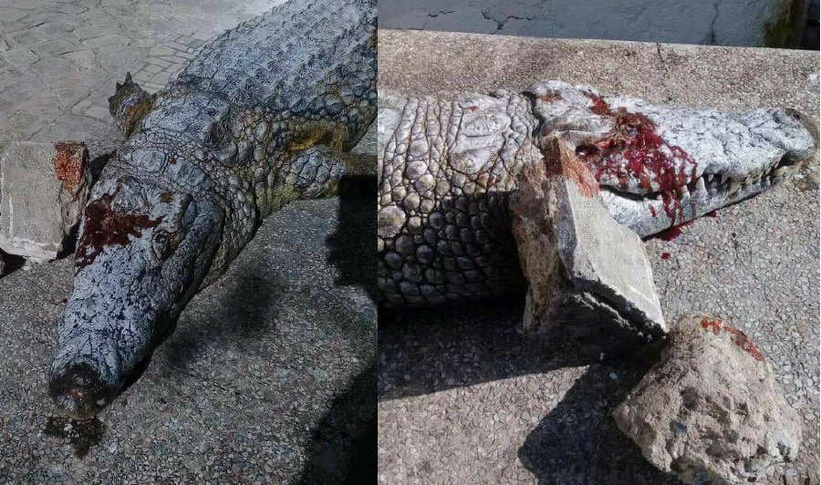 Tunisia zoo to close after crocodile stoned to death