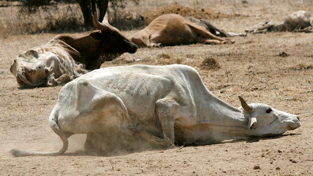 Drought in Kenya a catastrophe waiting to happen, warns UN