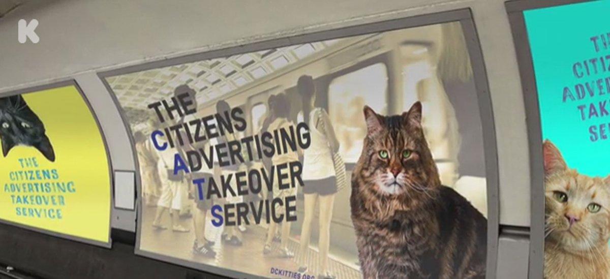 Grupo quer substituir anúncios de estação nos EUA por fotos de gatos https://t.co/83vYfa4u8p #PlanetaBizarro #G1