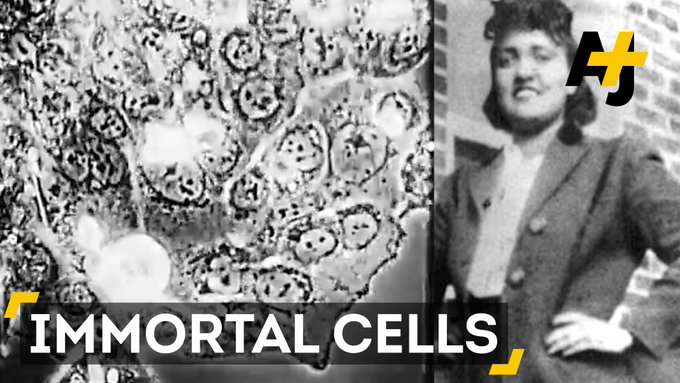 """Here are 5 astounding facts about Henrietta Lacks and her """"immortal"""" cells."""