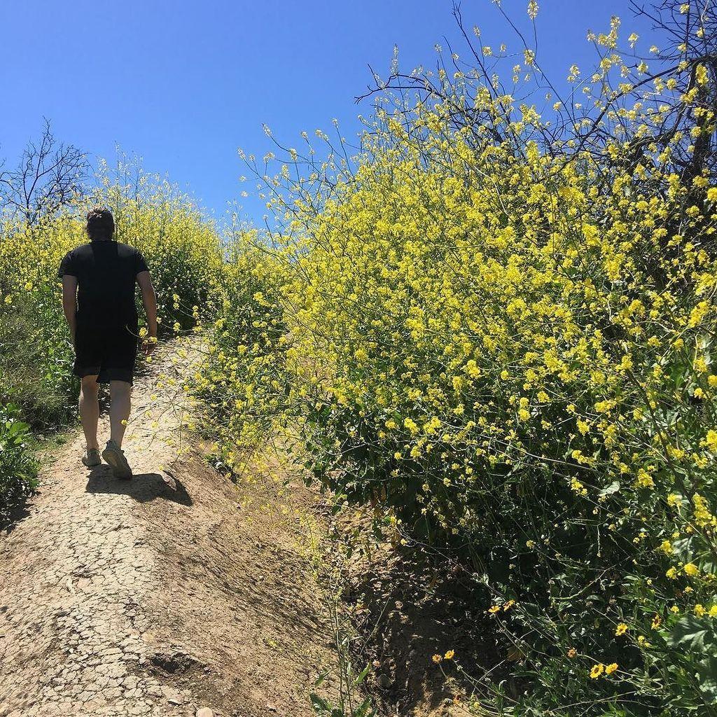 'Stop walking so weird' 📸 @calumhood