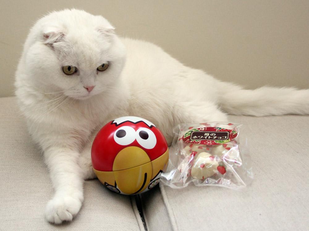 アシスタントさんから妻子にホワイトデーのお返しを戴きました。キョロちゃんの丸さを気に入ったネコと奪われてショックを受けるネコ。 http://t.co/0owM5AB6LY