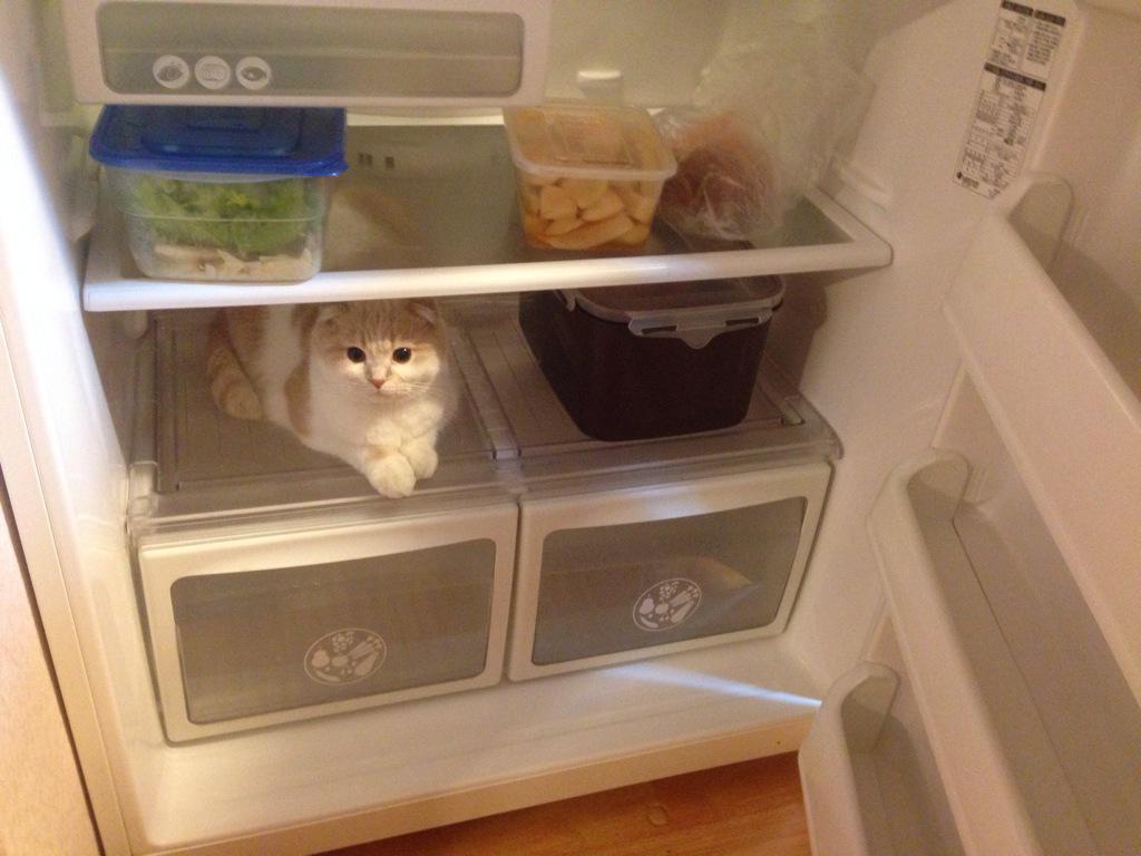 오늘의 바보고양이 http://t.co/YHwdYuE4PX