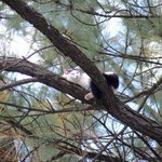 Gata é resgatada após ficar 4 dias presa em árvore a 15 metros de altura http://t.co/ze26Nx8xSJ #G1 http://t.co/TxpQ7Vaczx