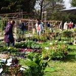 En Live de Primavera : L'occasion de faire le plein de plantes rares pour relooker son jardin http://t.co/WYbMppvxEk http://t.co/SJ2f7srbrr