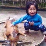 Una niña reconoce a su perro desaparecido en un local de carne canina de Vietnam http://t.co/0UTodd5w8q http://t.co/1td8chwQlj