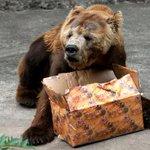 Conheça Zé Colmeia, o urso do RioZoo que sofre de depressão: http://t.co/xBoxpqCLPP http://t.co/M50s77NgDj