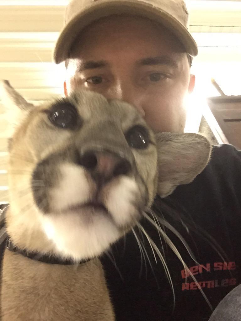 Cougar selfie
