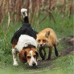 """Победитель в номинации """"Лучший охотничий пёс"""" http://t.co/nRt5WGPNzH"""