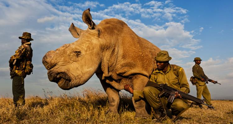 Last Male Northern White Rhino under 24/7 guard in Kenya to save species from extinction. Only 5 left on the planet. http://t.co/iK7qmK15Wj