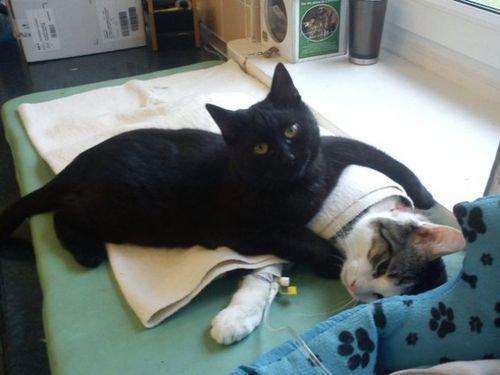 黒猫が他の動物たちを付きっきりで看病…ポーランドで評判に : らばQ http://t.co/GBug3UkkeV http://t.co/M0TEdp4OjB