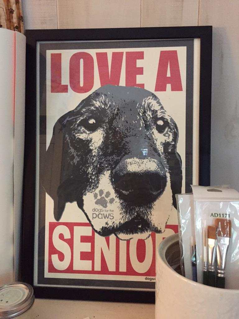 Love the #senior #pets #petsarefamilytoo http://t.co/4RbucU4ZpV