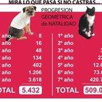 #Esteriliza La Crueldad con los Animales empieza cuando tu permites el Nacimiento de Perros y Gatos que Tu no Quieres http://t.co/347HRiHp6W