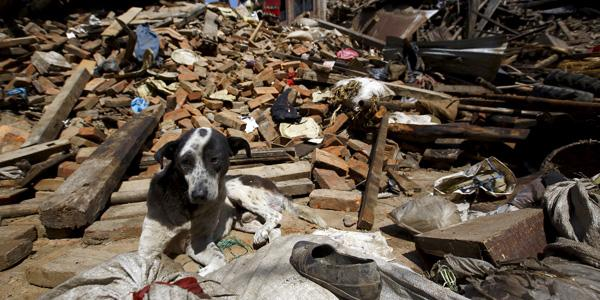 #NepalEarthquake catastrophic for people + animals. Our disaster team is on their way to give desperately needed help http://t.co/KciAMwpAhw