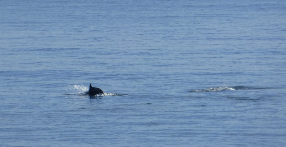 Dolphins spotted in #StAndrews bay by @shamblesklutz - how exciting! http://t.co/qEfFqzuz0K