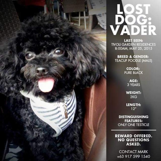 Please return our Vader. http://t.co/rwhwaYGel4