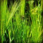 RT fmpreuss: Green fields everywhere .... http://t.co/auD3RD8HIR