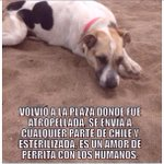@PamJiles abue por favor ayúdanos a encontrarle un hogar a Manchitas#Antofagasta @Martamaria_sf http://t.co/K965u2mK81