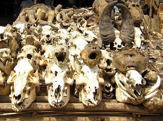 ふと見つけたブードゥーの呪物市場が魅力的 http://t.co/miVbGyceO3