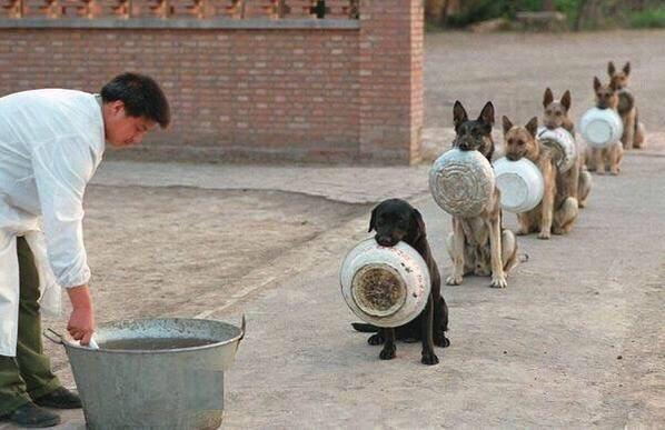 """Police dogs waiting for dinner in China"" ht @imgur http://t.co/PT3B9ZMwk1"