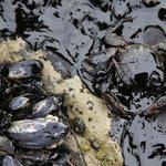 【アメリカ】カリフォルニア州で原油流出 州知事が非常事態宣言 http://t.co/KkVontJvdV http://t.co/5orPyfqH2V