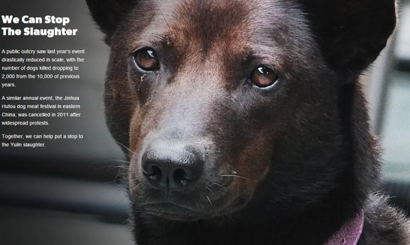 STOP THE YULIN DOG MEAT EATING FESTIVAL/https://t.co/N1AiHky07T #StopYulin2015 #StopYuLinTorture  Sign & RT! http://t.co/G3QQ6KcIZy