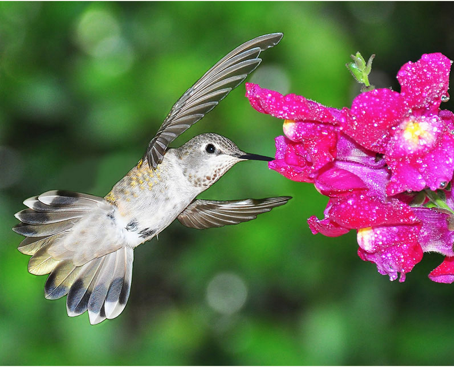 Celebrate the birds that pollinate for #PollinatorWeek! http://t.co/ntKwrMJzsg #ornithology #SIPollinator http://t.co/wnA5Ci8wKB