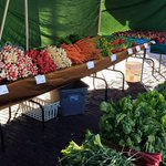 Fresh produce, flowers, local honey, handmade items and delicious treats await you at the markets in #Missoula http://t.co/D0a7b8uzaE