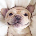 Жизнерадостный пёс http://t.co/pO0K6qod1e